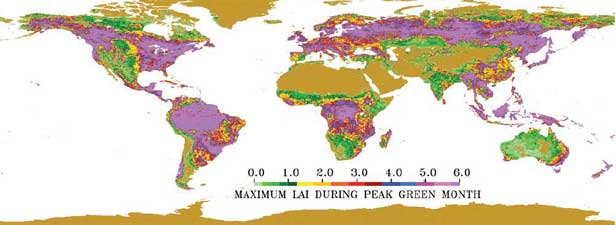 Maximum LAI during peak green month