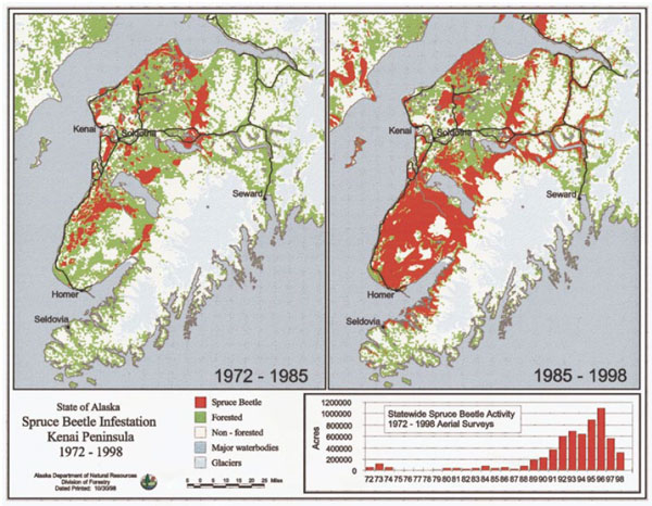 Bark beetle activity on the Kenai Peninsula, Alaska