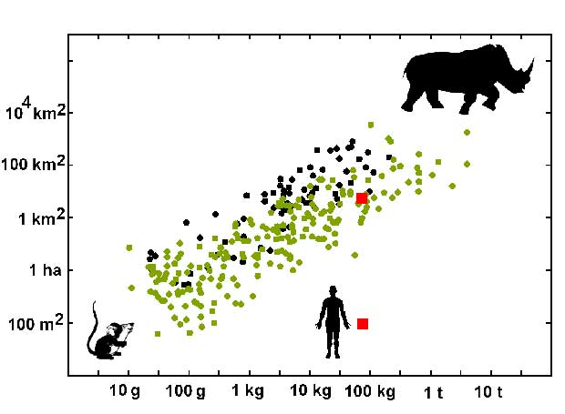 Home range area in mammals grows proportionally to body mass